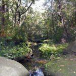 Bidjigal Reserve